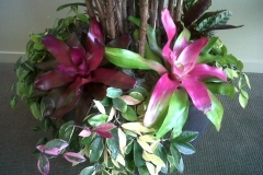 Bromeliad, Hoya & Brazilian Pothos Under Plants