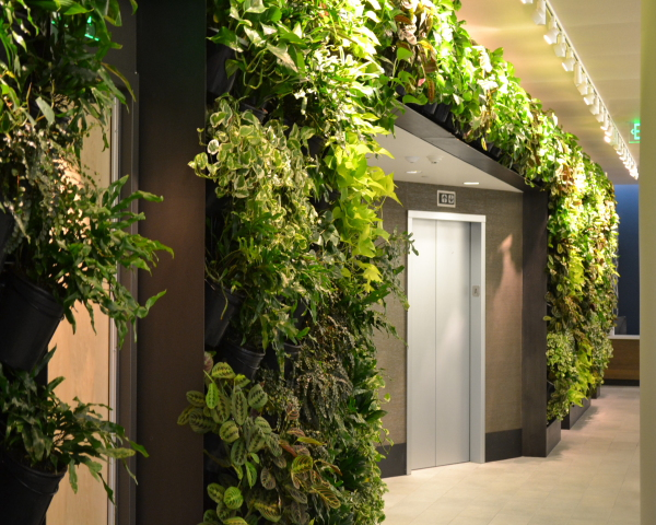 After Living Wall Green Wall installation