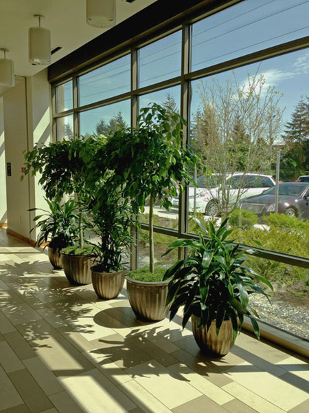 Interior Plant Maintenance Service In Seattle Mercer Island And Bellevue