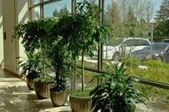 Lobby Plant Grouping